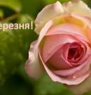 Вітання з 8 березня від Іванни Дубинки-Філозоф